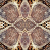 Tree Stump Pattern Royalty Free Stock Images