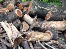 Tree stump Stock Photography