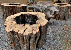 Tree stump Stock Images