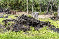Tree stump pushed up by lava Stock Image
