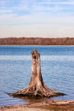 Tree Stump in Reservoir Lake Royalty Free Stock Photography