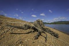 Tree stump with rope around Stock Photography