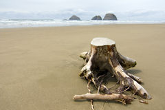 Tree Stump in the Sand Royalty Free Stock Photo