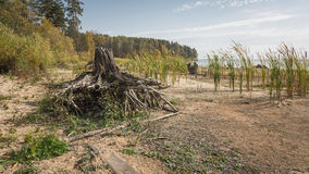 A tree stump on the shore of a lake Royalty Free Stock Photo