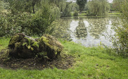 Tree stump at side of lake at Moses Gate Country Park. Near Bolton, Lancashire, England, UK with lily plants covering most of lake surface Stock Photography
