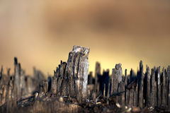 Tree stump skyline Royalty Free Stock Photo