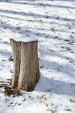 Tree stump in Snow. Old tree stump covered in snow with dead grass showing Stock Photos