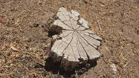 Tree stump in soil. Light brown etched tree stump in dirt and soil Royalty Free Stock Images