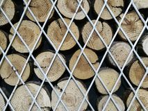 tree stump and steel grid Royalty Free Stock Image