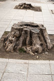Tree stump on street pavement Stock Photography