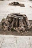 Tree stump on street pavement Stock Photography