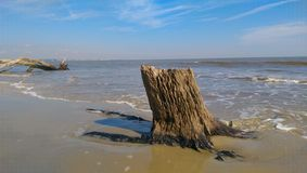 Tree stump in the surf Royalty Free Stock Images