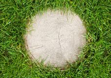 Tree stump surrounded by grass Stock Photo