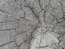 Tree Stump Texture. Detail of cracked and weatherworn tree stump with visible rings Royalty Free Stock Photography