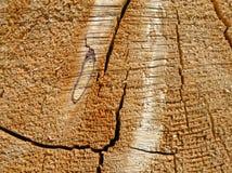 Tree stump texture. Detail of cracked and weatherworn tree stump Stock Photography
