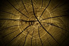 Tree stump texture Royalty Free Stock Photo