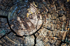 Tree stump texture abstract background Royalty Free Stock Images
