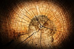 Tree stump Royalty Free Stock Photo
