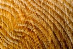 Tree stump texture Royalty Free Stock Photography