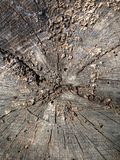 Tree stump texture Royalty Free Stock Photography
