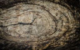 Tree stump texture Stock Photos