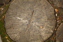 Tree stump top view. Stock Images