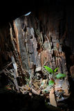 Tree stump. In Ural forest Royalty Free Stock Images