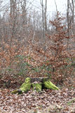 Tree stump. A weathered tree stump with moss, in an autumn forest Stock Photo