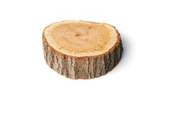 Tree stump on white background Royalty Free Stock Image