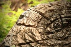 Tree stump in the wild. Closeup old Tree stump in the wild Stock Image