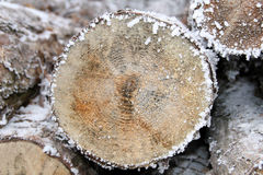 Tree stump in winter time. Royalty Free Stock Photo
