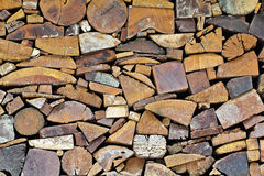 Tree stumps Royalty Free Stock Image