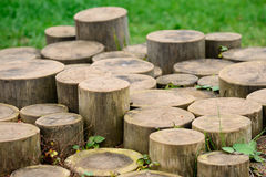 Tree Stumps Stock Images