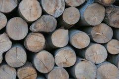 Tree stumps Stock Image