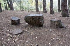 Tree stumps Royalty Free Stock Photography