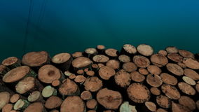 Tree stumps background stock video footage