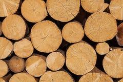 Tree stumps background Stock Photography
