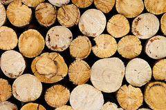 Tree stumps background. Wood background. Stock Photos