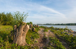 Tree stumps on the banks of a river Stock Images
