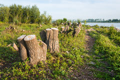 Tree stumps on the banks of a river Stock Photo