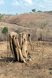 Tree stumps after deforestation and burn for agriculture Stock Photography