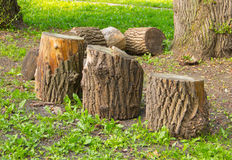Tree stumps, deforestation Royalty Free Stock Images