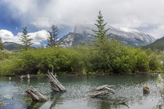 Tree Stumps Emerging From a Mountain Lake - Alberta, Canada Royalty Free Stock Photos