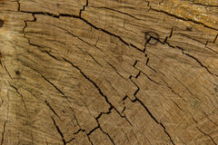 Tree stumps. And felled forest deforestation Royalty Free Stock Photos