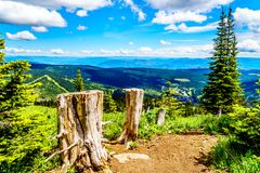 Tree Stumps on a hiking trail on Tod Mountain near the alpine village of Sun Peaks in the Shuswap Highlands of British Columbia. Canada royalty free stock photo