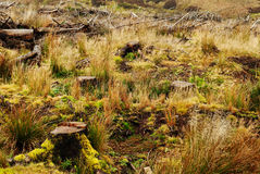 Tree stumps Royalty Free Stock Photos