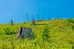 Tree stumps on mountain with blue sky Stock Image