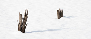 Tree stumps in snow covered pond Royalty Free Stock Photography
