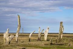 Old dead tree's. Old dead tree stumps at Thornham harbour Stock Photo