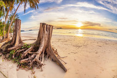 Tree stumps on tropical beach Stock Images